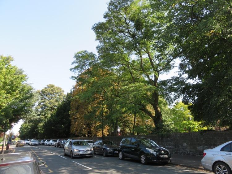 Trees along Kings Weston Road