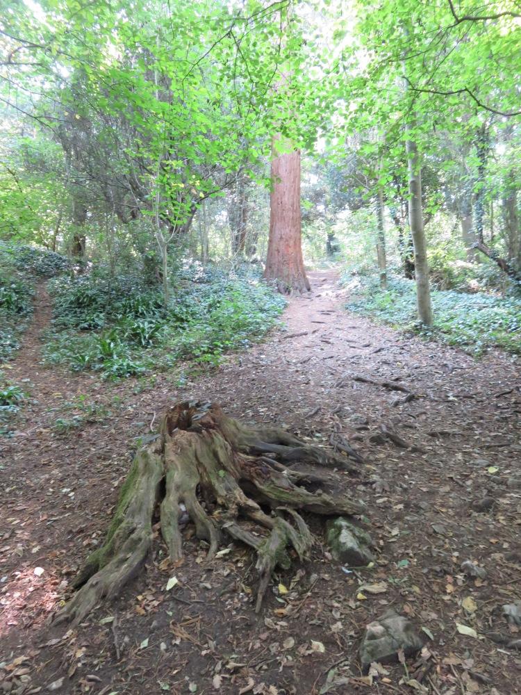 Continue past the tree stump