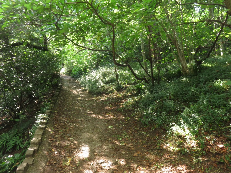 The path down through the periwinkles