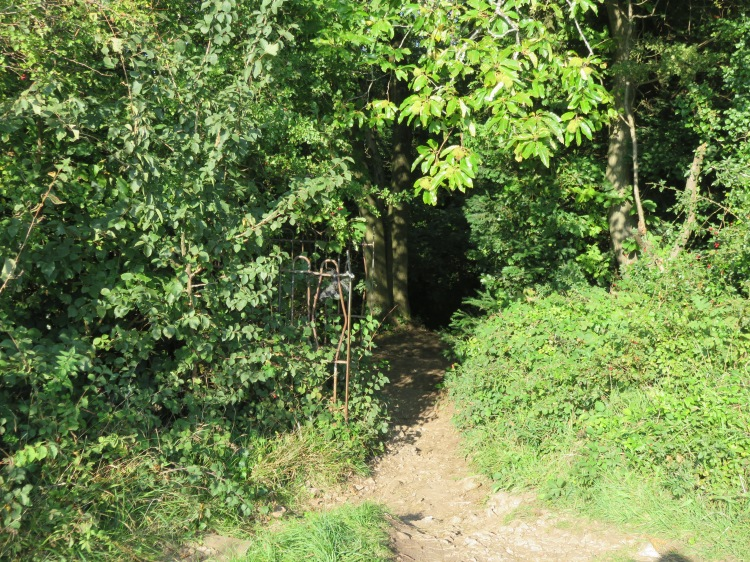 The hidden entrance to the woods at Kings Weston Hill