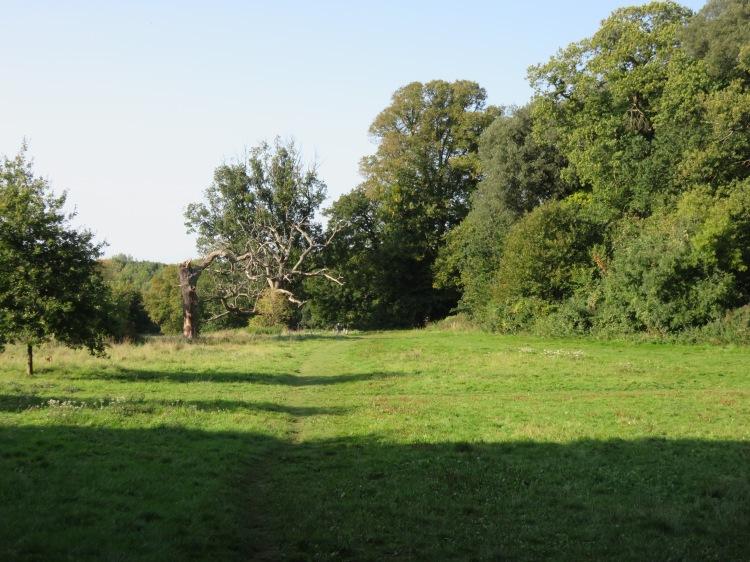 Walk past the dead trees