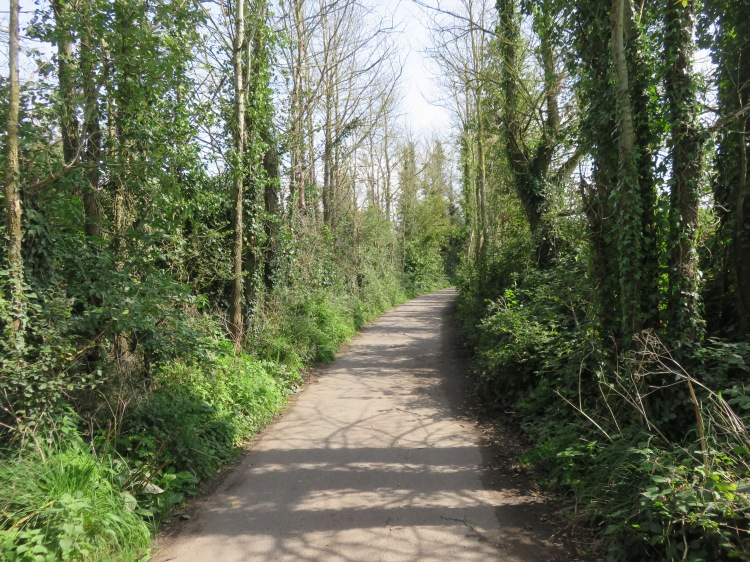 Tree-lined Wharf Lane
