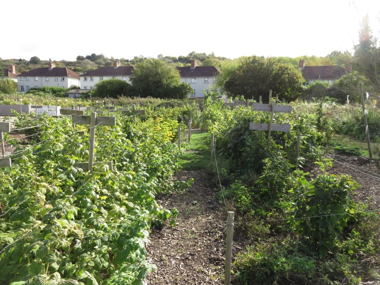The Berry Maze on the Malago Greenway
