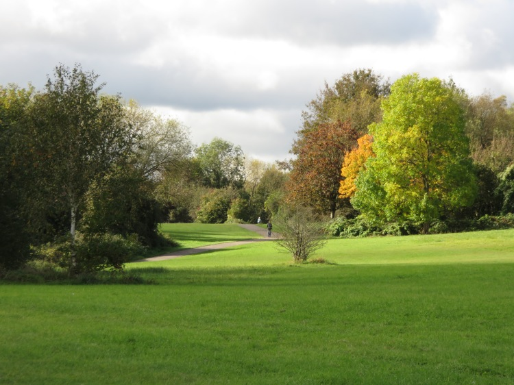 More autumn colours in Manor Woods Valley