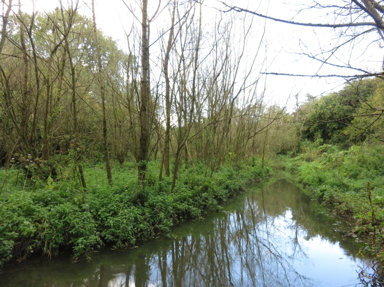 Wooded glade by the weir, Manor Woods Valley