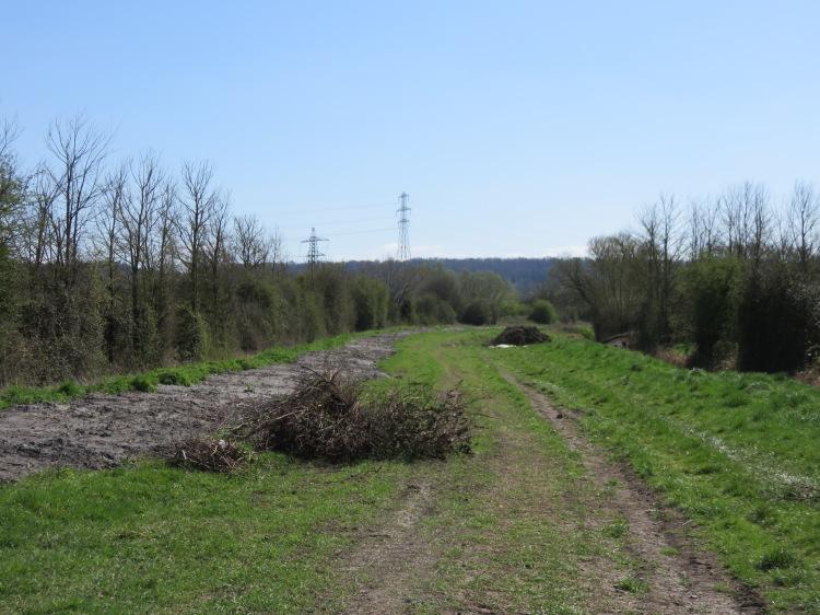 The grassy bank off Moorhouse Lane