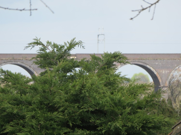 The distant railway viaduct is glimpsed beyond trees off Bury Hill