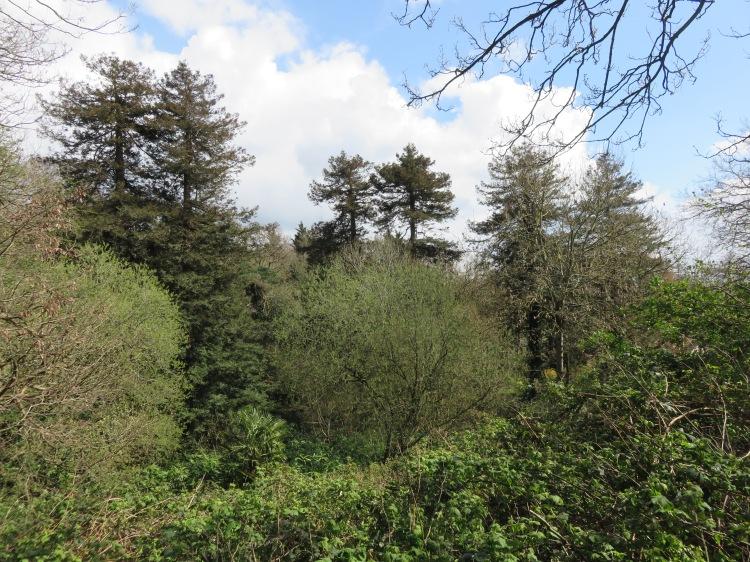 Trees in the Bradley Brook valley