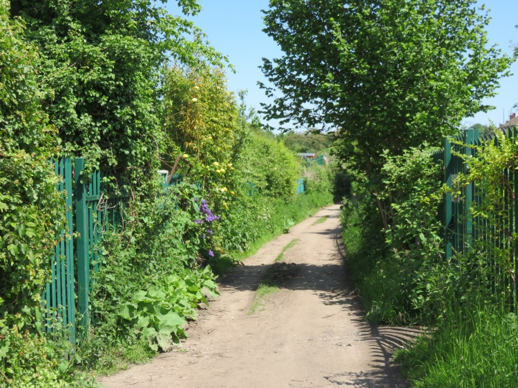 The track through Royate Hill Allotments