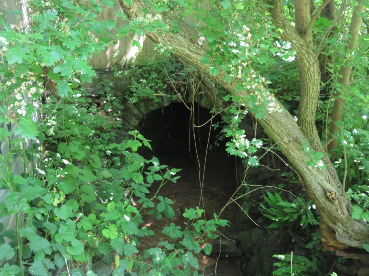 The Coombe Brook culvert at Greens Hill