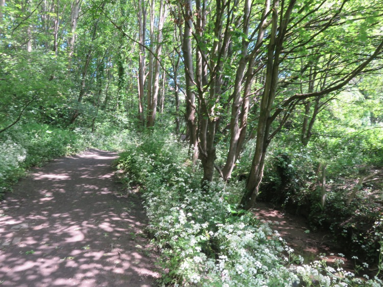 Coombe Brook Nature Reserve